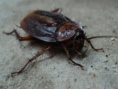 photo of a cockroach