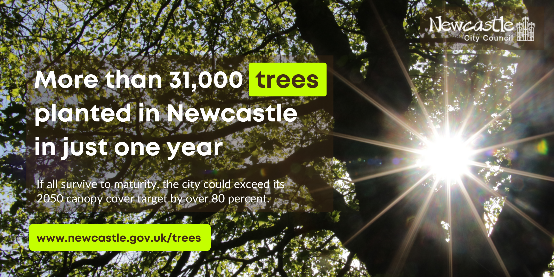Sun shining through trees in Newcastle. Text: More than 31,000 trees planted in Newcastle in just one year.