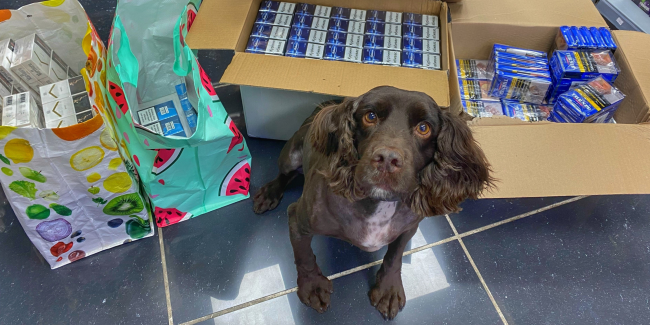 Sniffer dog Yoyo with some of the suspected illegal cigarettes